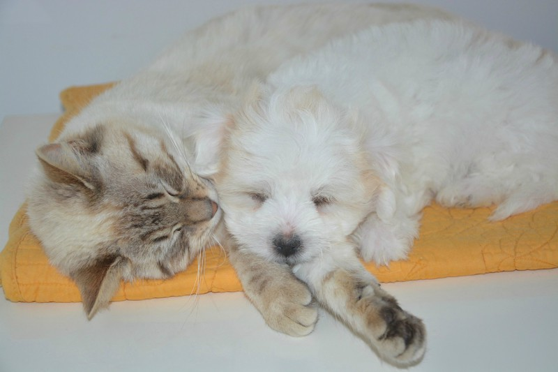 Skrb za hišne živali