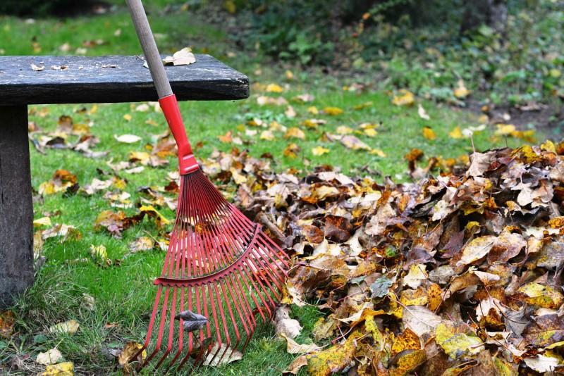 Urejanje okolice - čiščenje listja