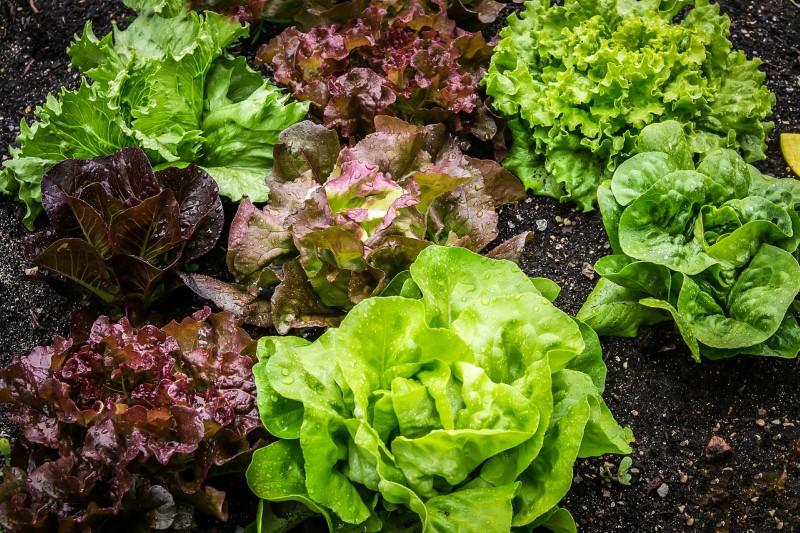 Urejanje okolice - zelenjavni vrt